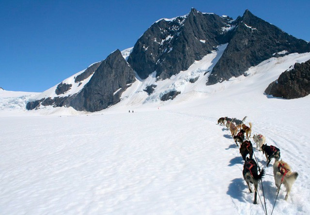 dogsledding in Juneau