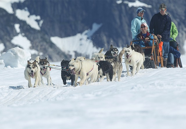 dog sledding in Juneau