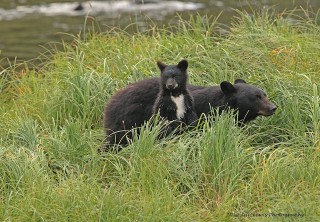 Photo of Mama Bear and Baby Bear