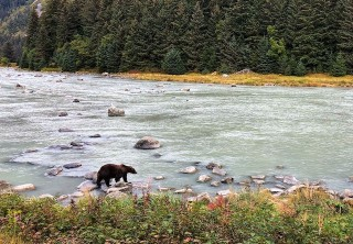 Photo of bear hunting for salmon