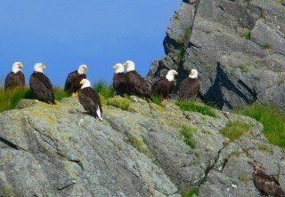 Photo of lighthouse totems eagles excursions tour