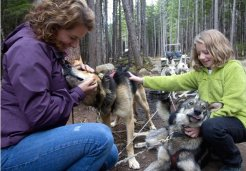 Photo of skagway mushers camp and sled dog adventure
