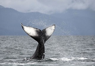 Photo of whale in juneau ak