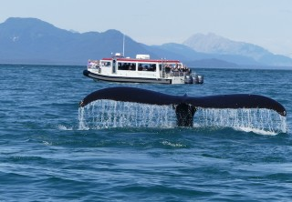 Photo of Icy Strait Whale Watching Tour