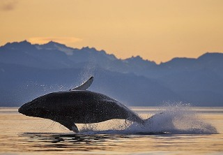 Photo of whale watching at sunset