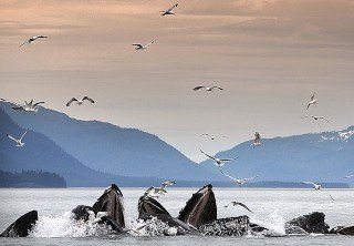 Photo of whale watching tour in juneau