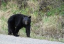 Photo of Bear Sighting