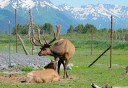 Photo of Chugach_wildlife_with_view