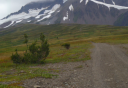 Photo of Haines Alpine ATV Full Day Adventure Gravel Road