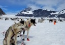 Photo of Juneau Extended Norris Glacier Dog Sledding Adventure Alaskan Huskies