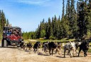 Photo of Skagway Yukon Discovery_and_Sled_Dog_Tour