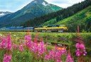 Photo of Train Flower Field Mountain Alaska Railroad