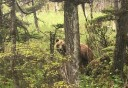 Photo of Whale and Brown Bear Combo Adventure Bear behind tree