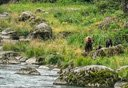 Photo of browen bear with cubs in haines