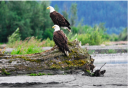 Photo of eagles