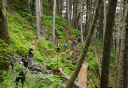Photo of haines mount riley hike rainforest hiking