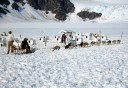 Photo of juneau dog sled tour
