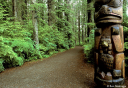 Photo of sitka national park trail