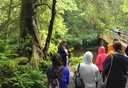 Photo of sitka rainforest walk