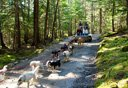 Photo of skagway sled dogs