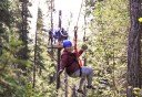 Photo of soaring through the trees in denali