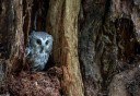 Photo of swt owl tree   Edited