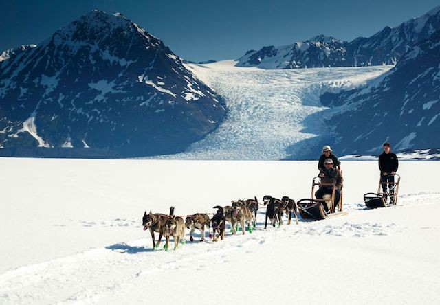 Photo of Anchorage Helicopter Glacier Dogsled Tour Dogs closeview