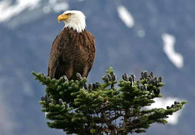 Skagway Chilkat Bald Eagle Preserve Rafting Tour To Haines Alaska Shore Excursions