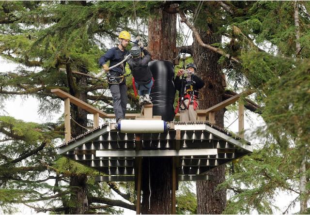 Ketchikan Bear Creek Zipline Adventure Alaska Shore Excursions