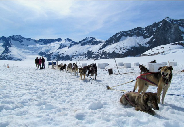glacier dog sledding