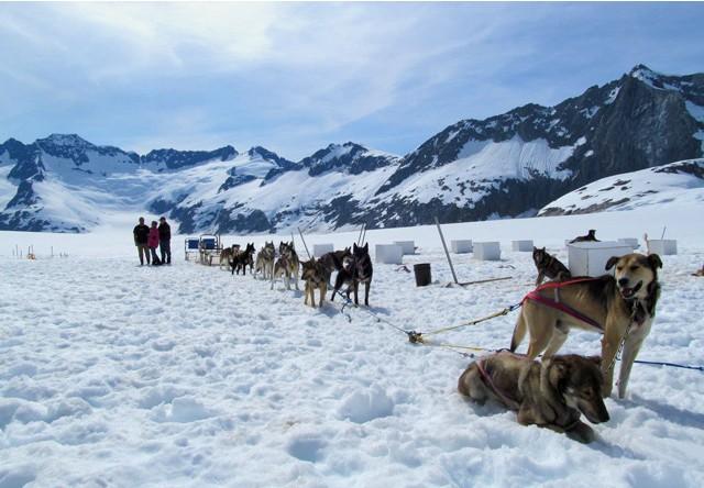 Juneau Glacier Dogsled Tour Via Helicopter Alaska Shore Excursions - Alaska tour