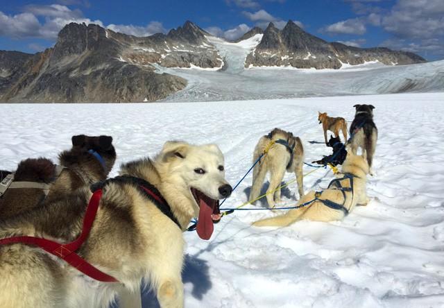 Skagway Dog Sledding Amp Glacier Flightseeing Helicopter