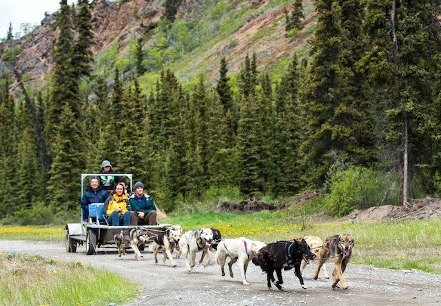 Photo of sled dog discovery